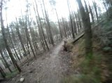 MTB Trail Riding
